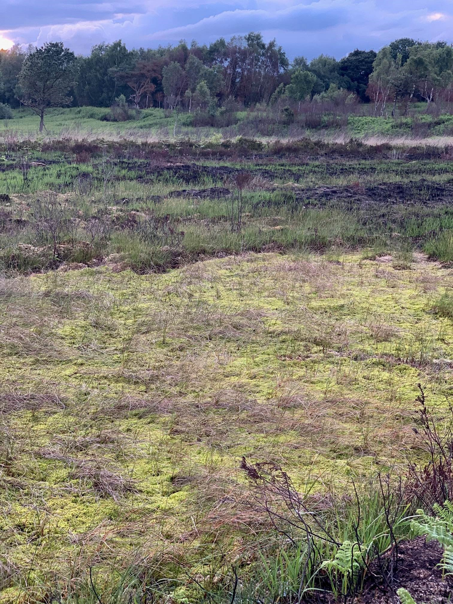 Lough Neagh Landscape Partnership Moss Blog – June 25th 2019