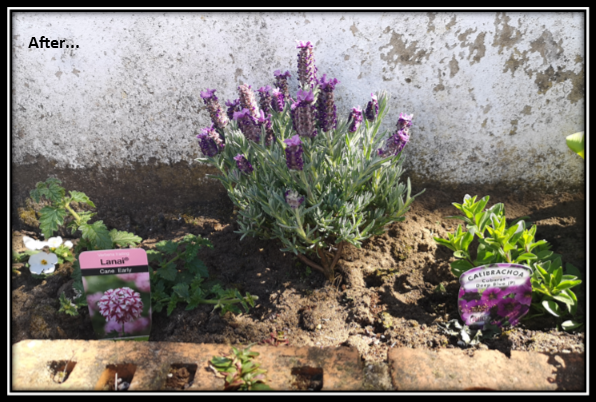 Improving Your Garden for Wildlife – Planting for Pollinators